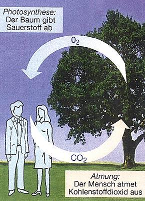 atmen pflanzen auch